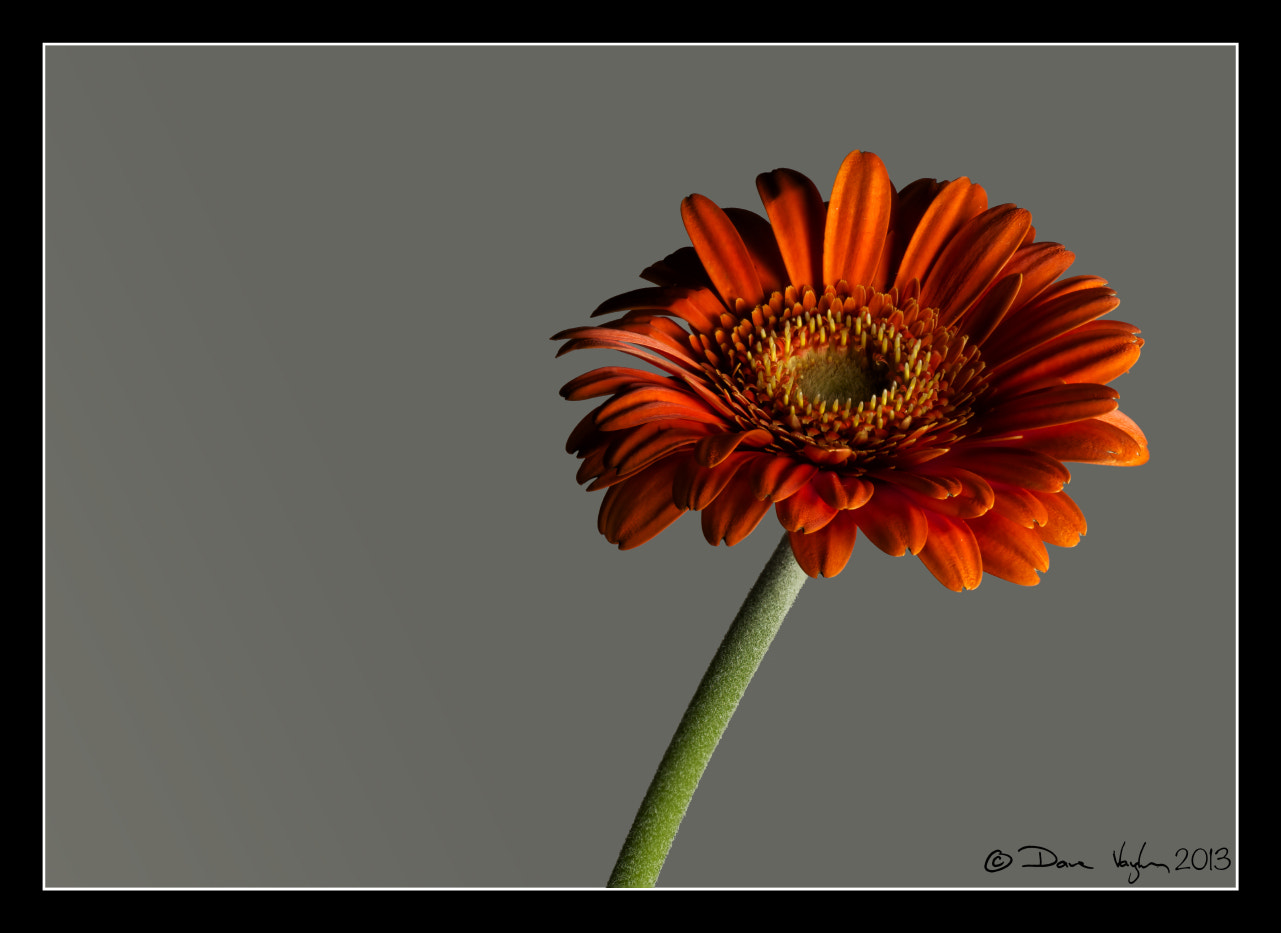 Photograph Orange by David Vaughan on 500px