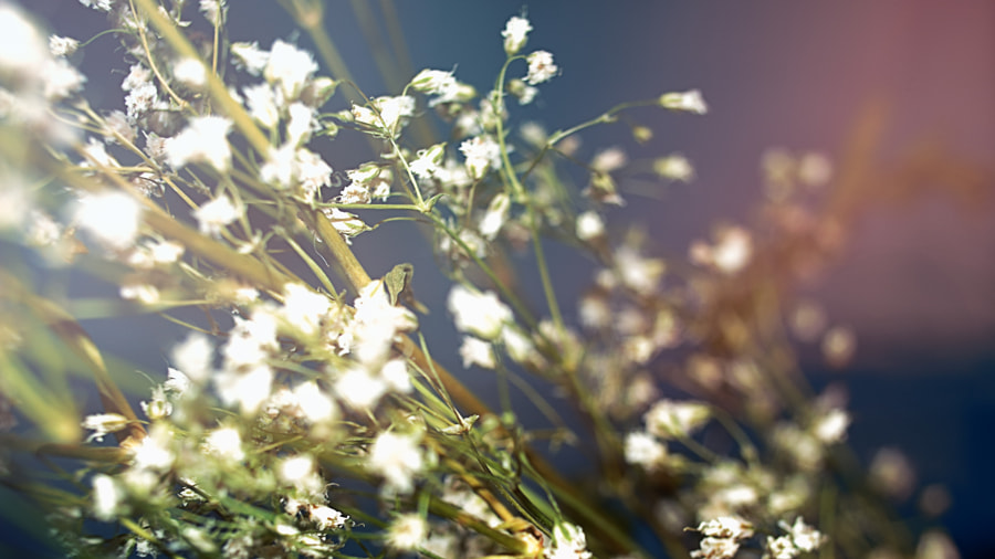 Baby's Breath 1 by Jeff Carter on 500px.com