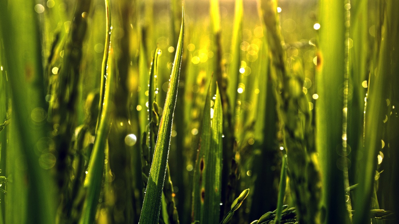 Photograph Mornig Grass by Ainul Yaqin on 500px