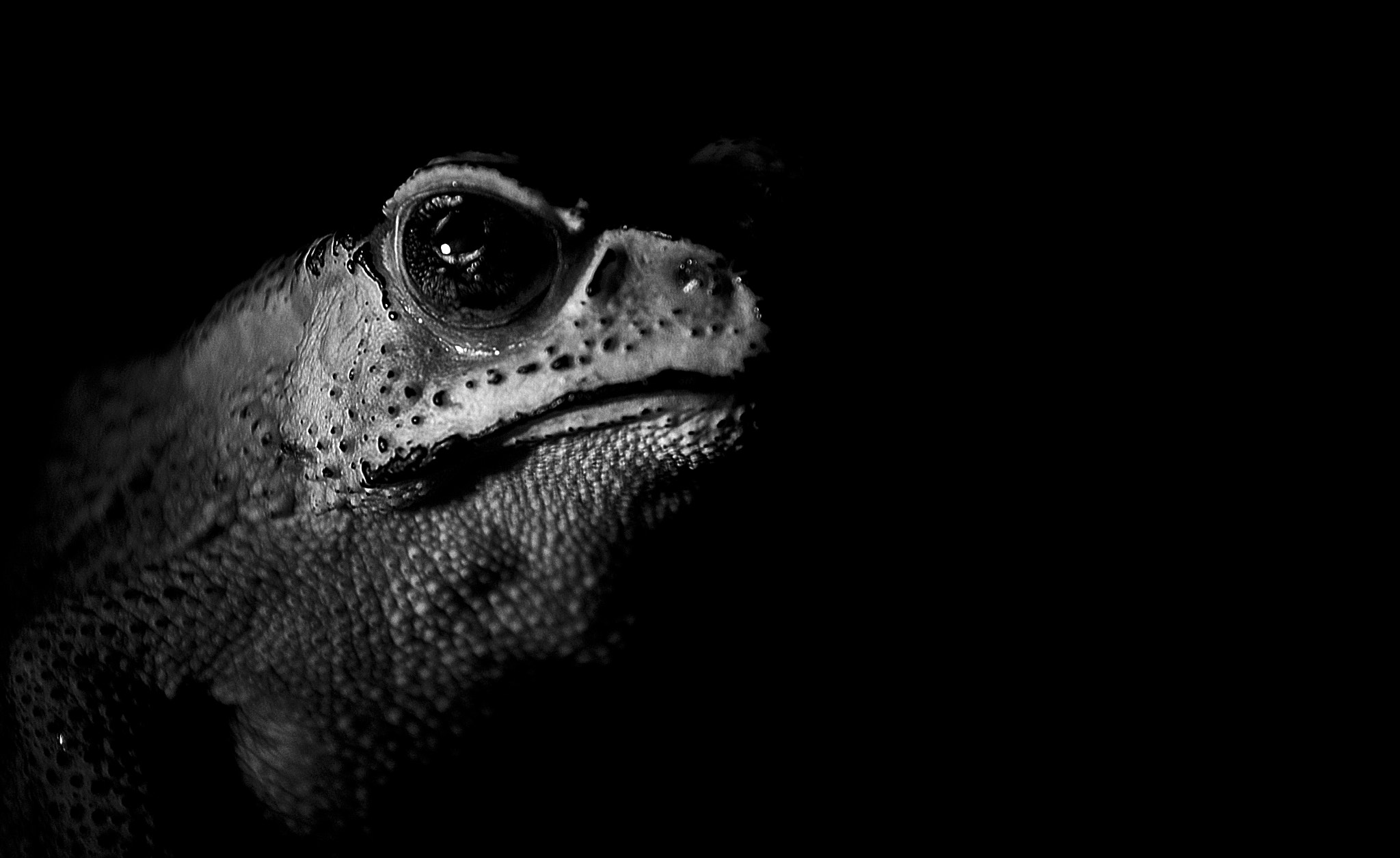Photograph Mr. Frog by Ainul Yaqin on 500px