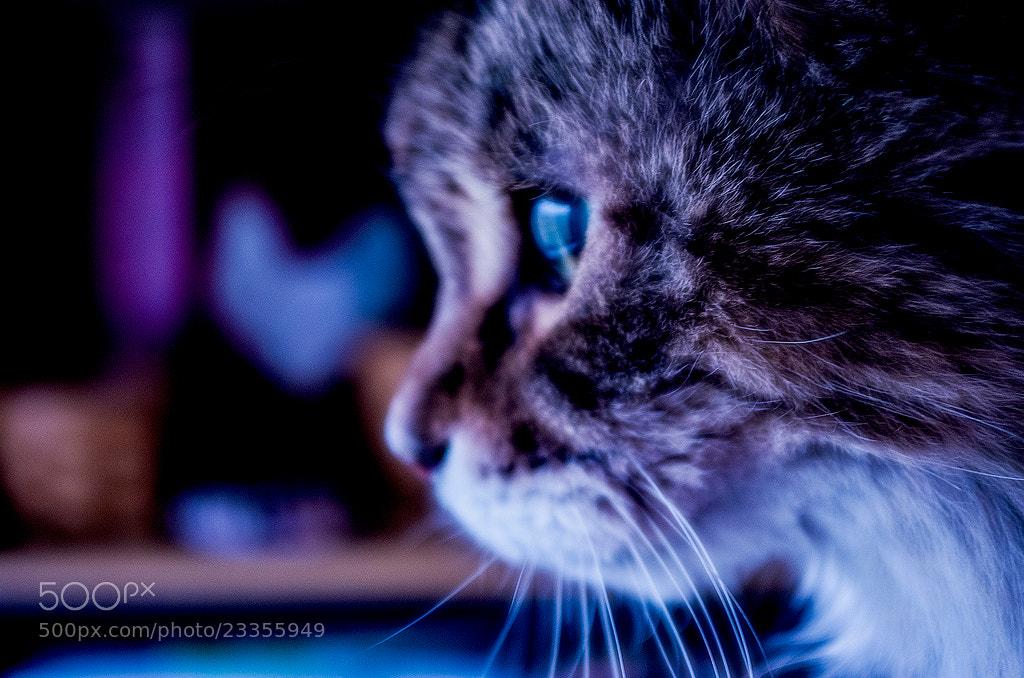 Photograph Blue.  by Elizabeth  Frantz  on 500px