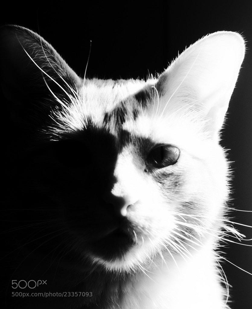 Photograph Mirthless.  by Elizabeth  Frantz  on 500px