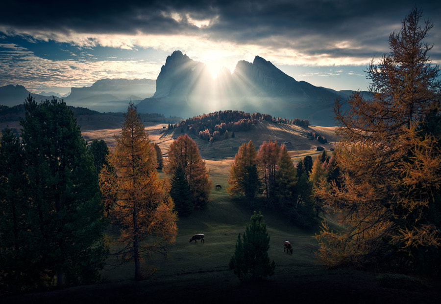 A New Start by Max Rive on 500px.com
