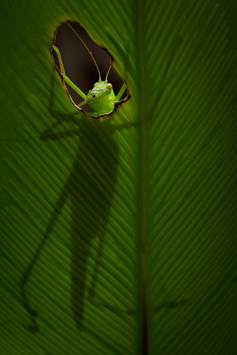 Photograph The Katydid 2 - The Aftershock by Steve Passlow on 500px