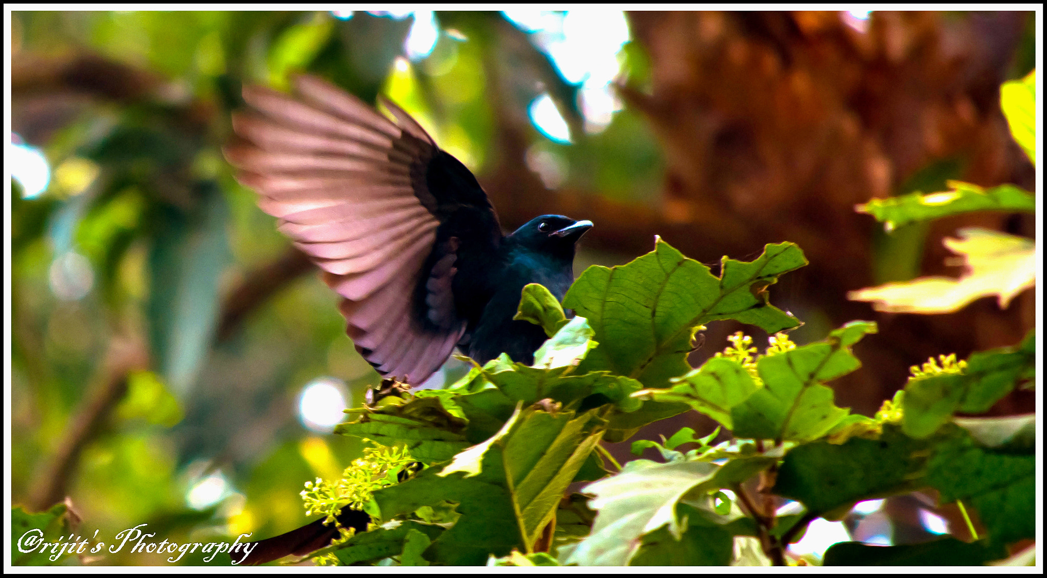 Photograph About to Fly.. by Arijit Bose on 500px