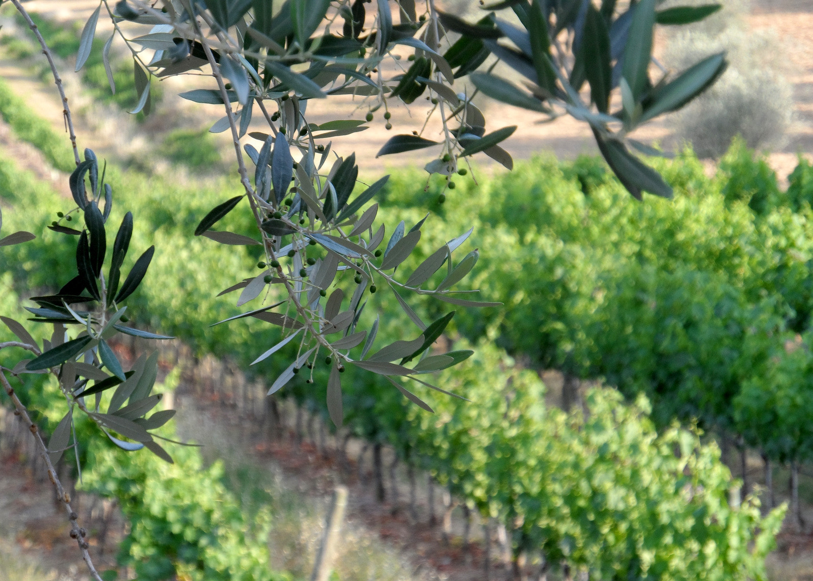 Photograph Olives and Grapes by Debora M on 500px