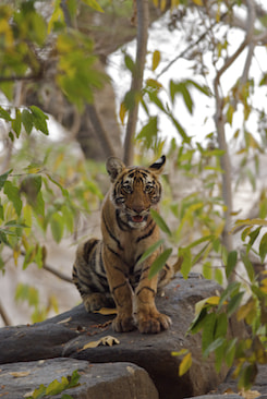 Photograph Cub on Rock by Ken Clark on 500px