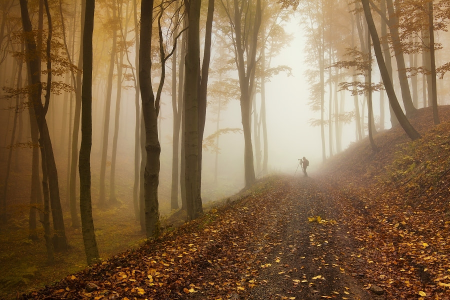 Photograph In the autumn forest by Daniel Řeřicha on 500px