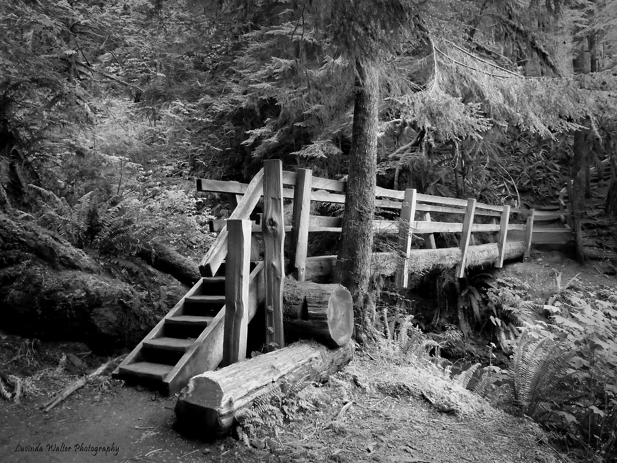 Photograph Bridge in Silver by Lucinda Walter on 500px