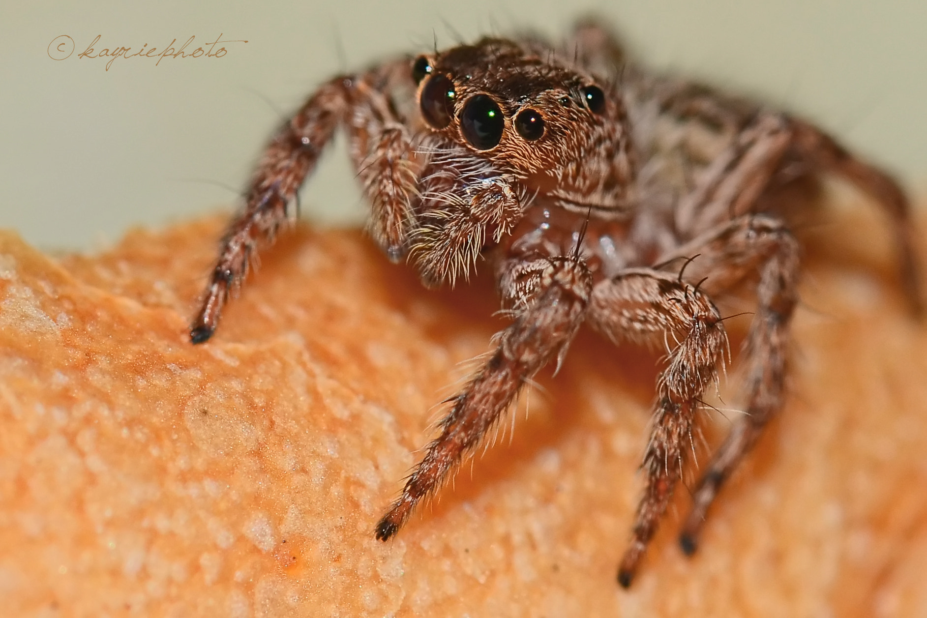 Photograph Spider on top of bread by keri ganu on 500px
