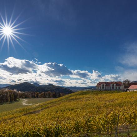 autumn vineyard in carinthia