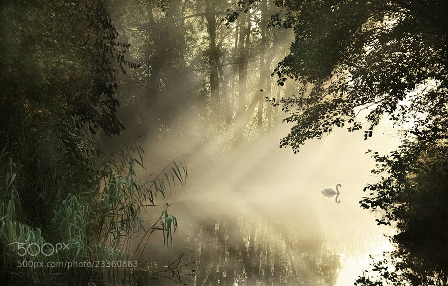 Photograph morning light by Paula Loonen on 500px