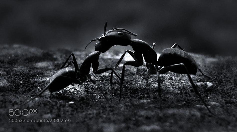 Photograph Ants by Premkumar Antony on 500px