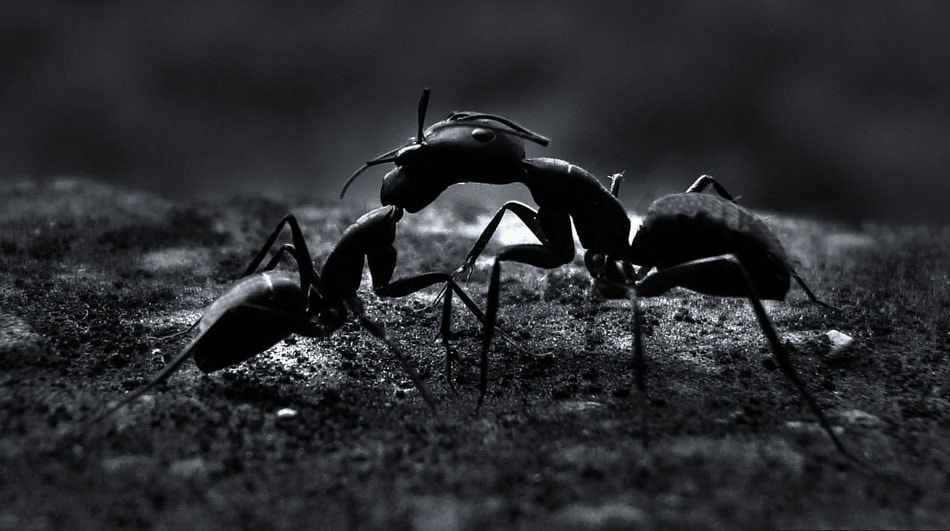 Photograph Ants by Premkumar Antony on 500px