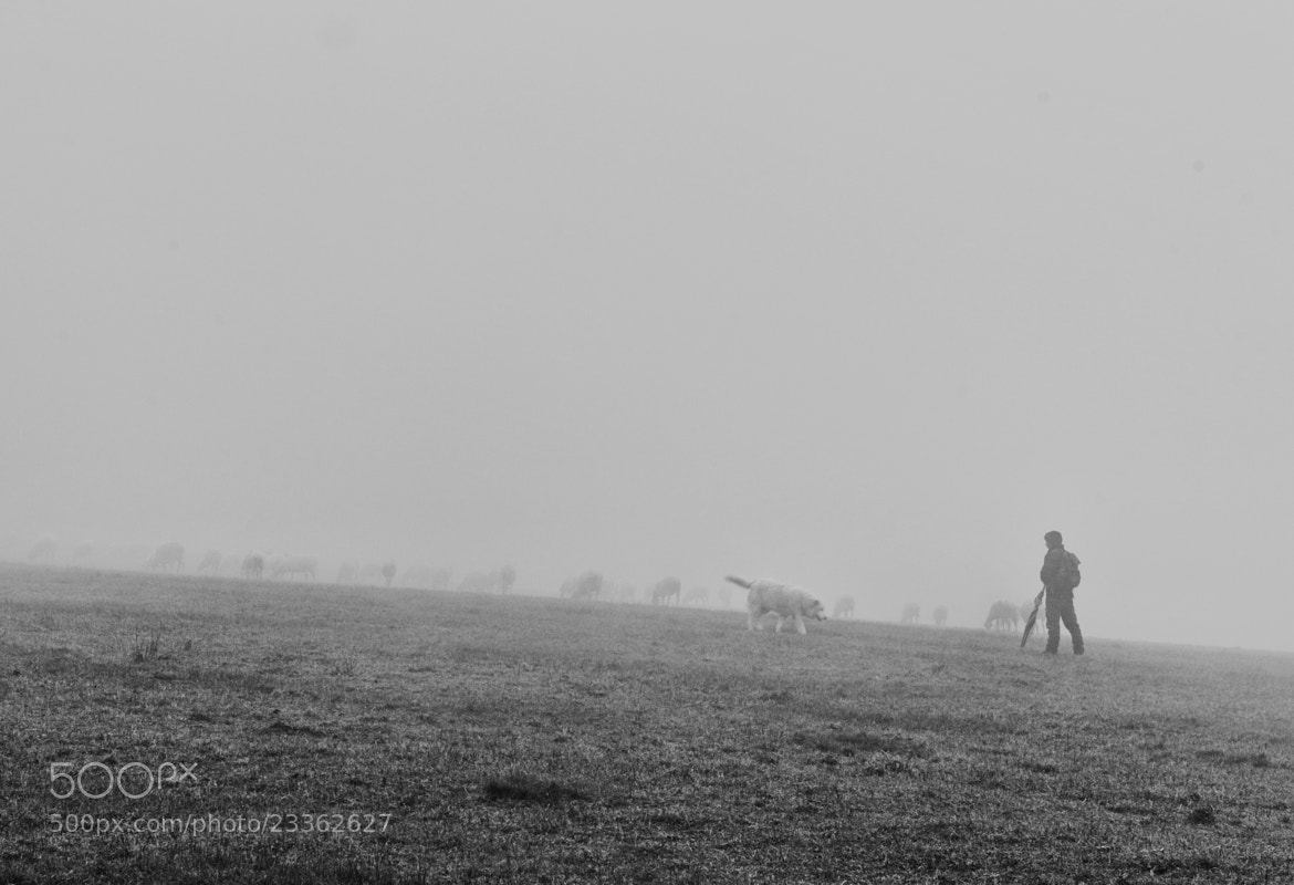 Photograph the flock and fog by mauro maione on 500px