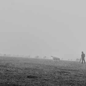 the flock and fog by mauro maione (marveros)) on 500px.com