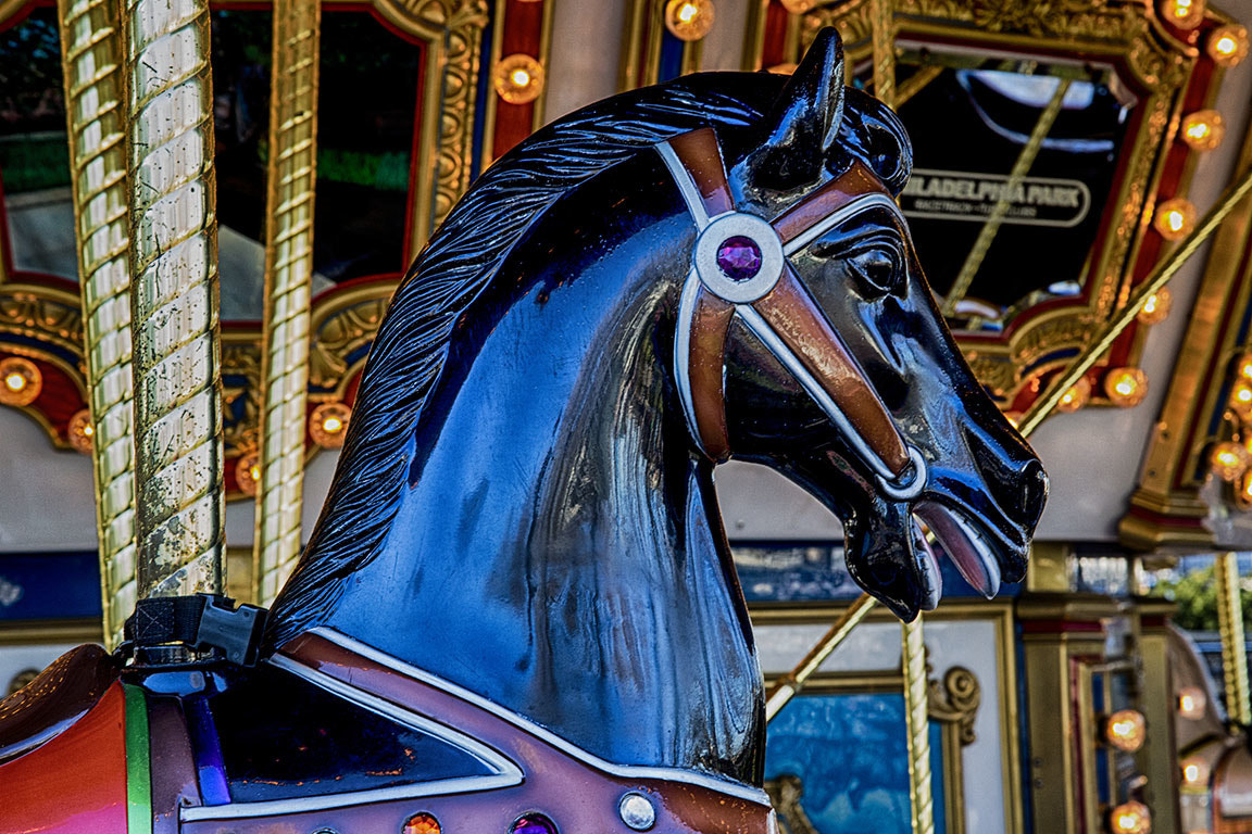 Photograph Black Horse by Sonny Hamauchi on 500px