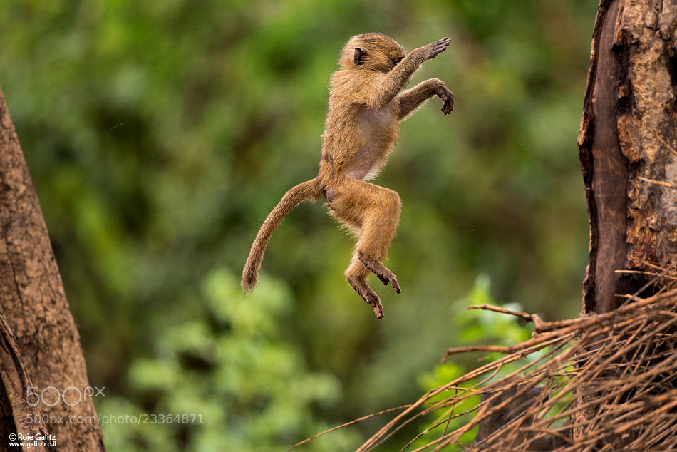 Photograph Leap Forward by Roie Galitz on 500px