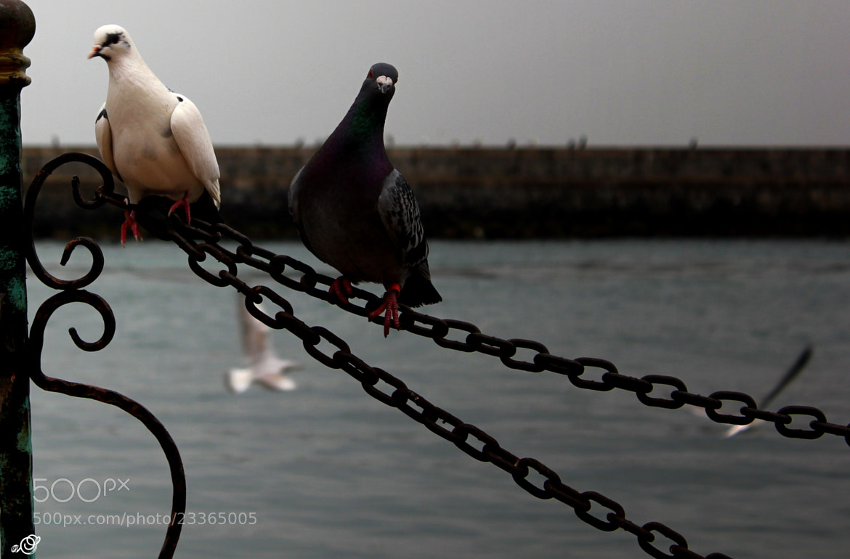 Photograph don't disturb by Ahmet ŞİMŞEK on 500px