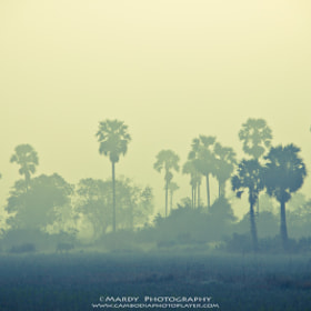 Cow and Palm Tree In The Mist! by Mardy Photography (Mardy)) on 500px.com