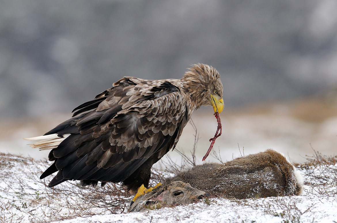 Photograph Spaghetti Special by Harry  Eggens on 500px
