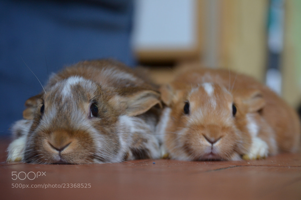 Photograph lapins by Pierre-Etienne Guillemin on 500px
