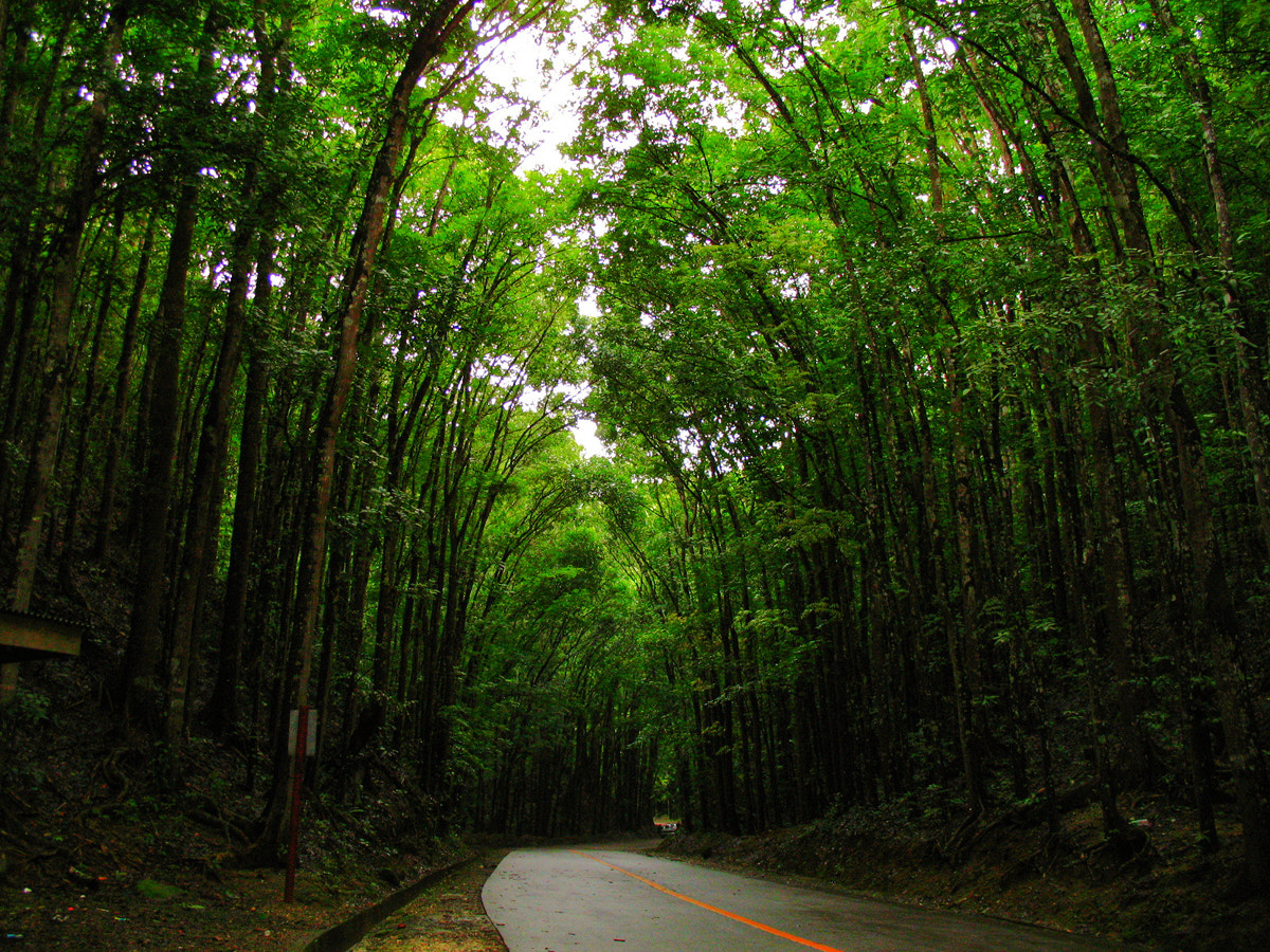 Photograph Tree Tunnel by Junel Mujar on 500px