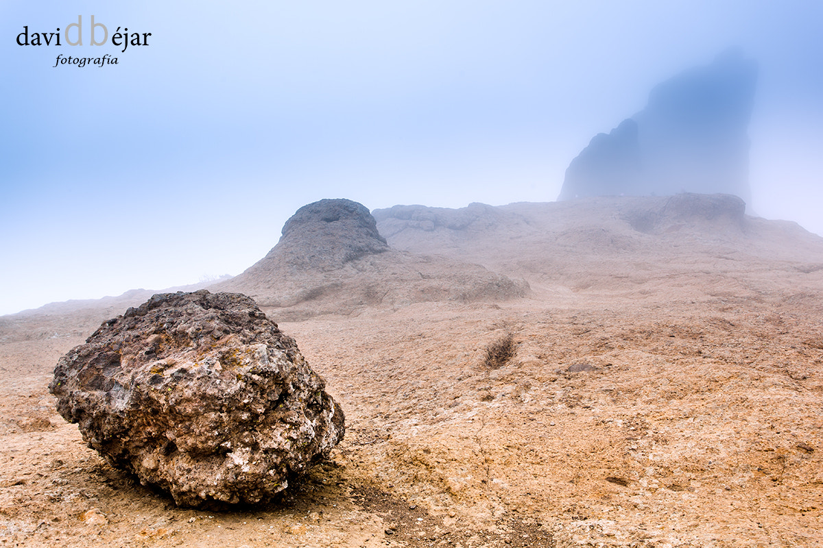 Photograph The rock and frog by David Béjar on 500px