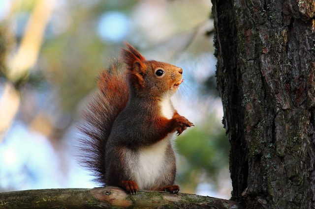 Photograph My model, the squirreled by Fotograf LindaElm on 500px