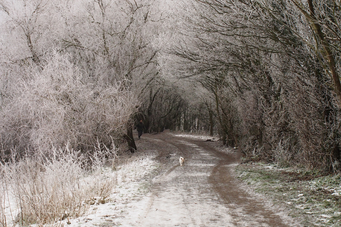 Photograph Frosty Walk by John Purchase on 500px