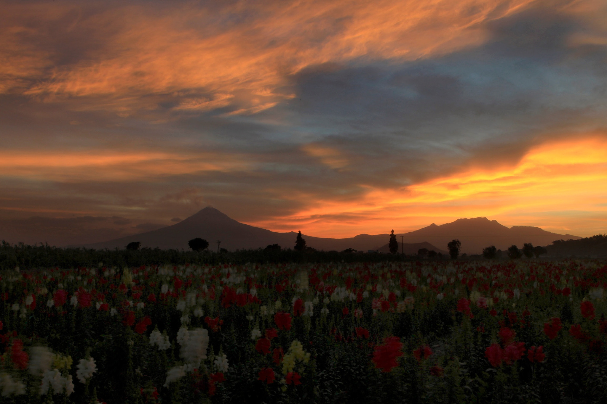Photograph Field flower and sunset by Cristobal Garciaferro Rubio on 500px