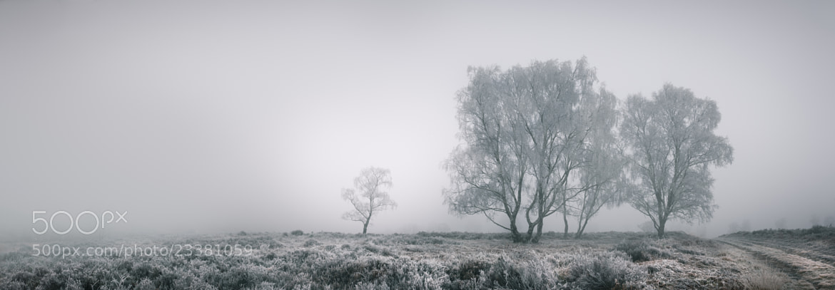 Photograph Cannock Chase by Andy Astbury on 500px