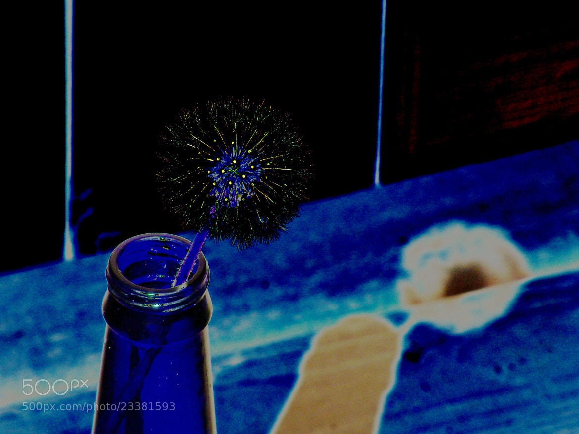 Photograph Dandelion in Black, Blue and Yellow by Nancy Andersen on 500px