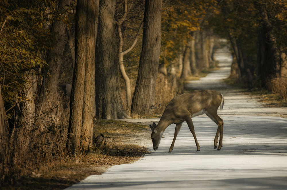 Photograph Crossing the Path by Ginny Sussman on 500px