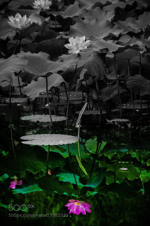 Photograph 明鏡止水 by Kazuki Miyawki on 500px