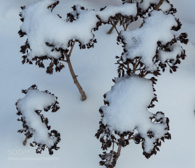 Photograph Winter flowers by Olga Filipova on 500px