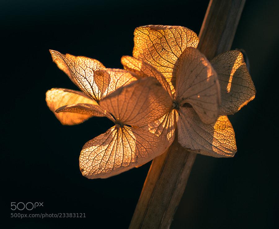 Photograph Vegetable veins by Brane Kosak on 500px