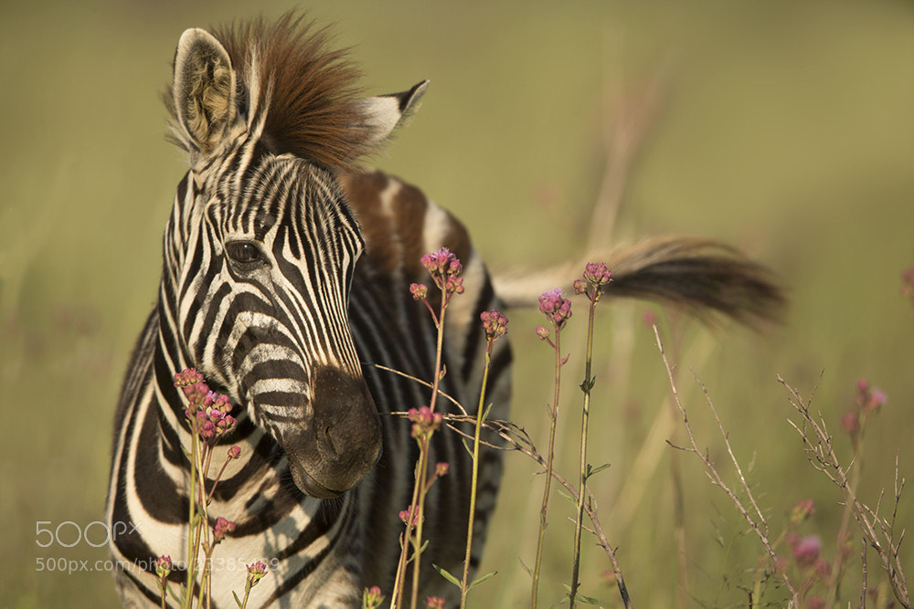 Photograph Young and funky by Loretta Steyn on 500px