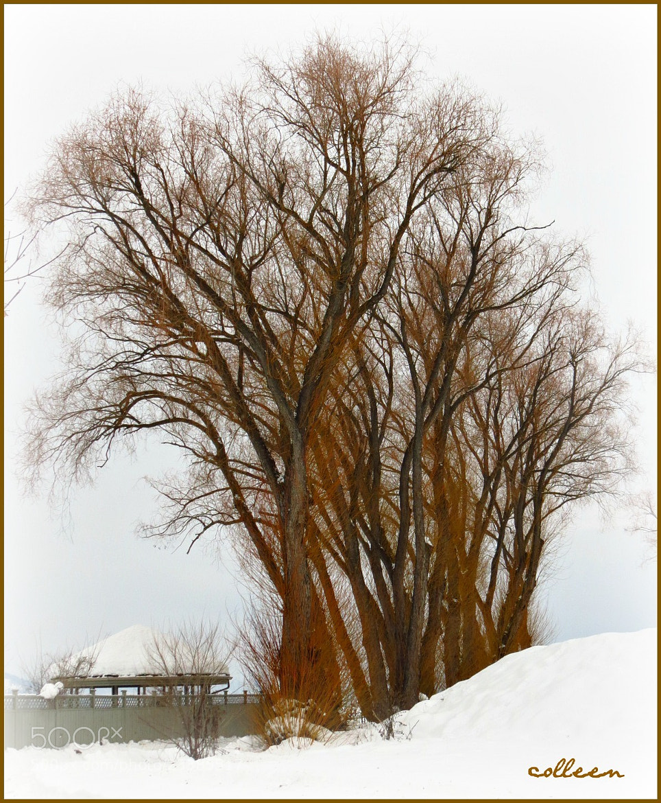 Photograph The Trees! by colleen thurgood on 500px