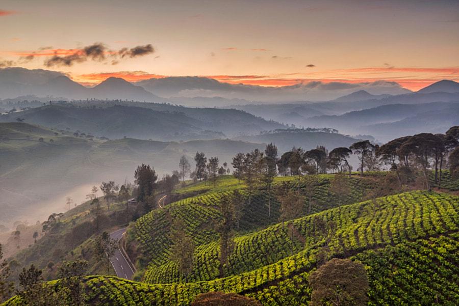 Pre-Sunrise Scenery at Cukul Tea Plantation by Kristianus Setyawan on 500px.com