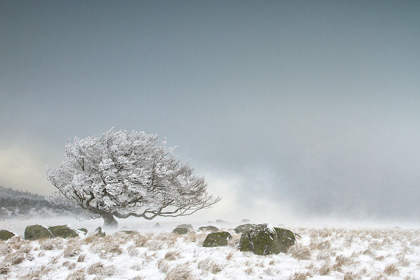 Photograph My favorite tree by Philippe Lebeaux on 500px