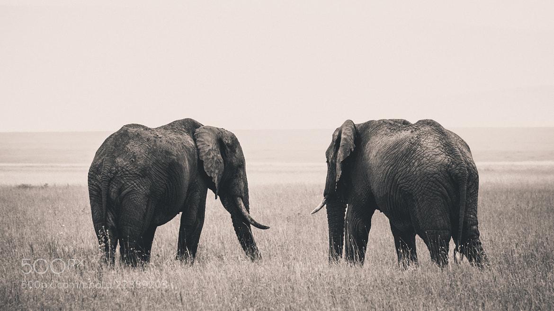 Photograph Serengeti elephants by Jonas Stenqvist on 500px