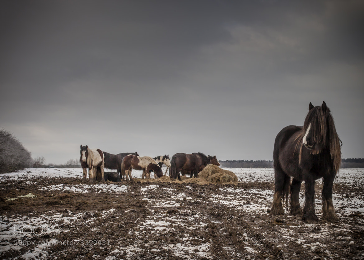 Photograph Horses by Chris Paul on 500px
