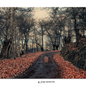 Galician forest 4 by Jorge Cacharrón (xurxo)) on 500px.com