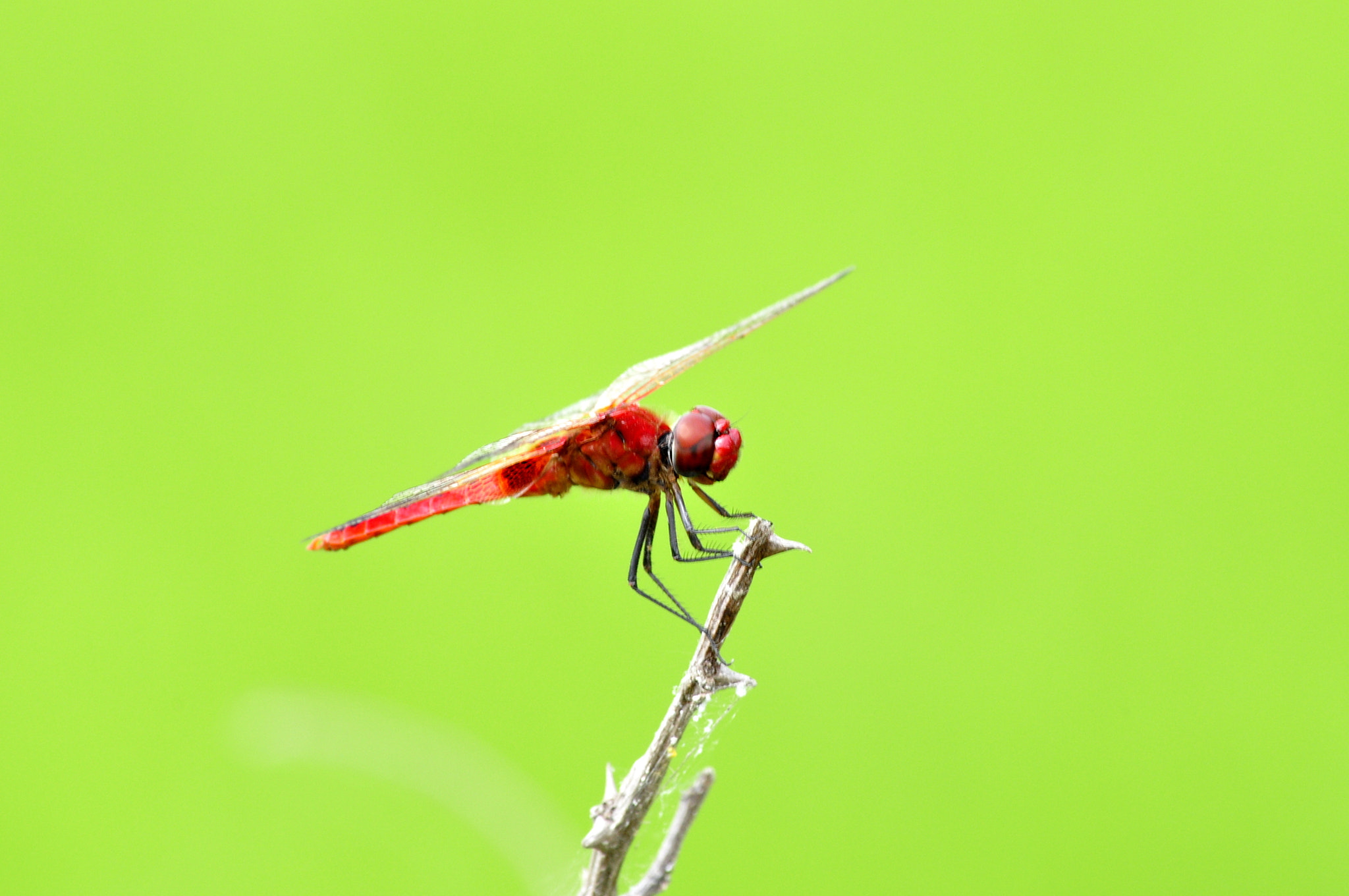 Photograph Dragon Fly by Chaithanya Holla on 500px