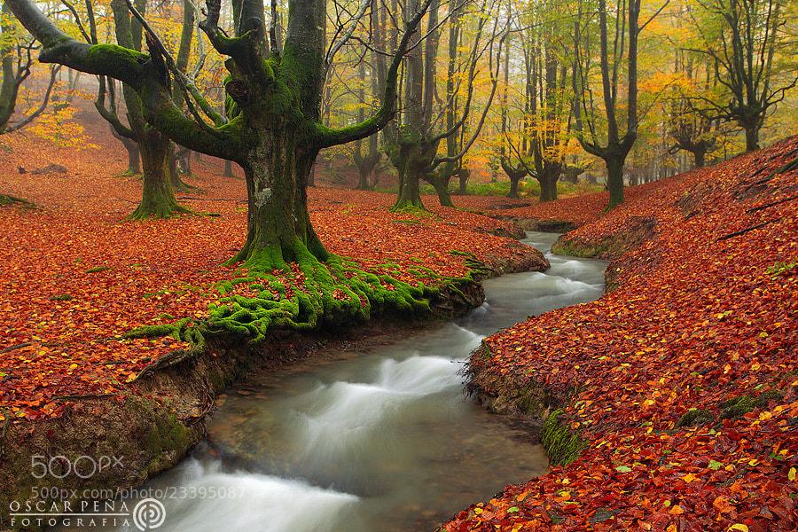 Photograph -The forest - by Oscar  Peña on 500px