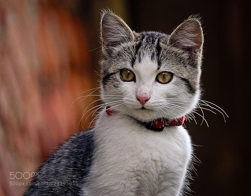 Photograph My beautiful whiskers by Brane Kosak on 500px
