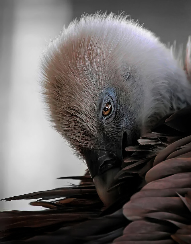 """Photograph """"by vultures""""  by Johnny Brambach on 500px"""