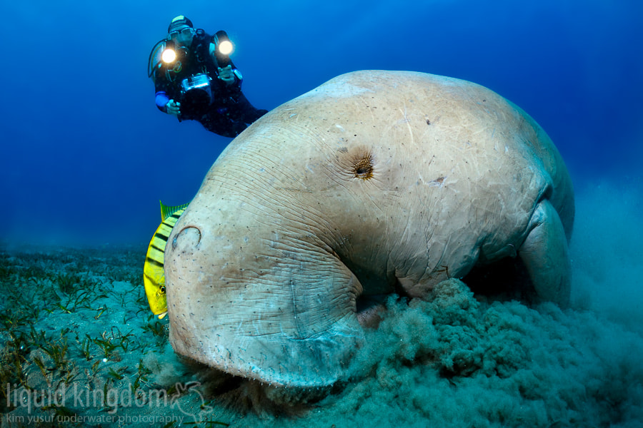 Photograph Dugong I by Kim Yusuf on 500px