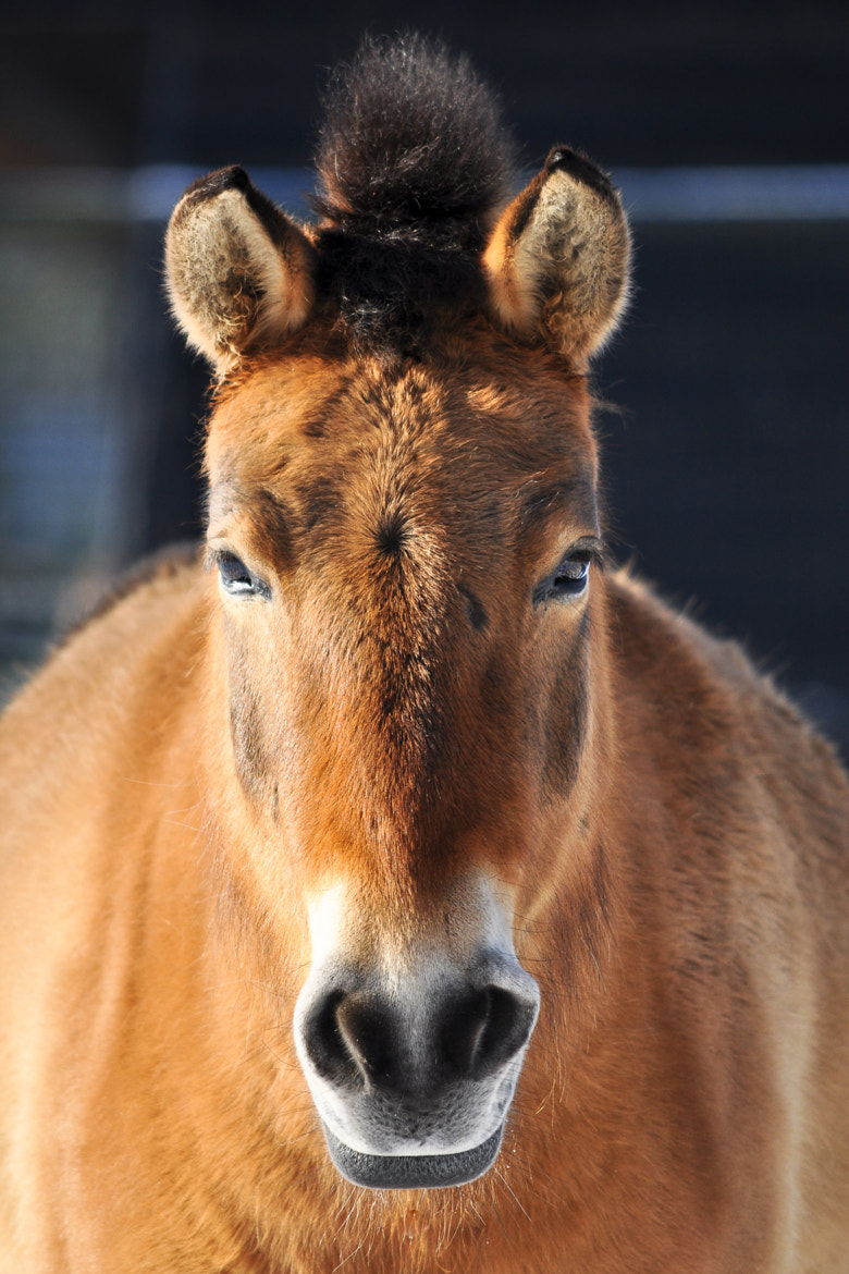 Photograph Horse by Liliane Geerts on 500px